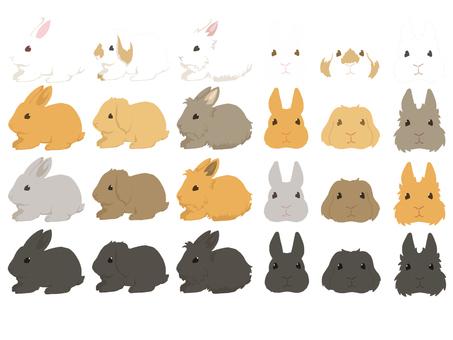 Rabbit set coating