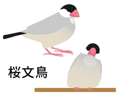 桜 bird