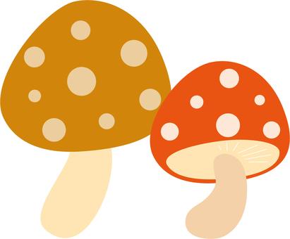 식물 버섯 1