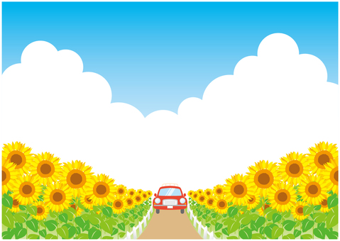 Drive the sunflower field