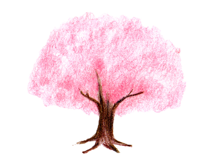 Cherry tree (color pencil drawing)