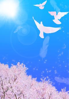 비둘기가 날아 푸른 하늘 벚꽃 a1