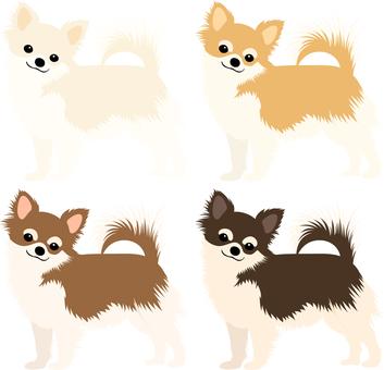Chihuahua icon set