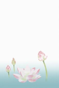 엽서 3. 연꽃