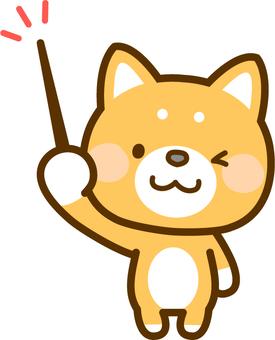 Shiba Inu with a stick