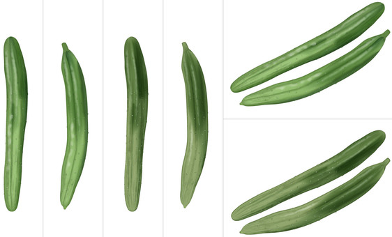Cucumber / Vegetable