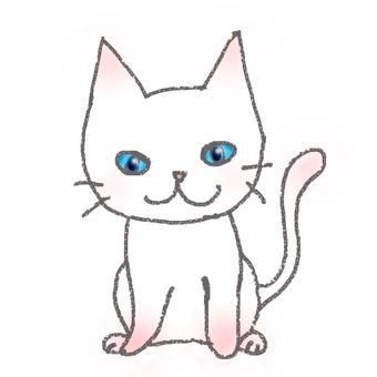 White kitten (blue eye)