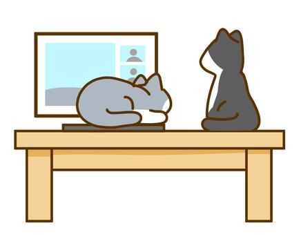 桌子上的貓