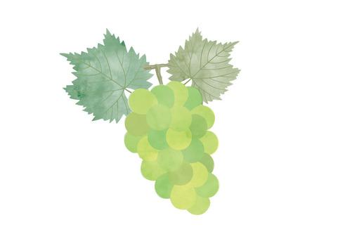 Grape watercolor 01
