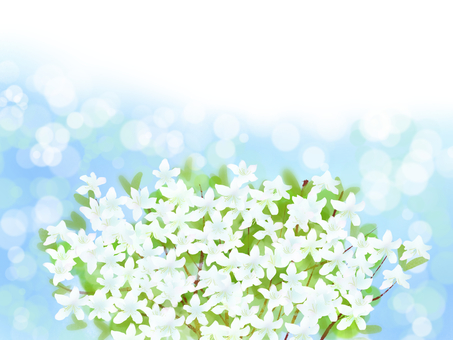 Mihabara 躑躅 (Mitsuba azalea) white