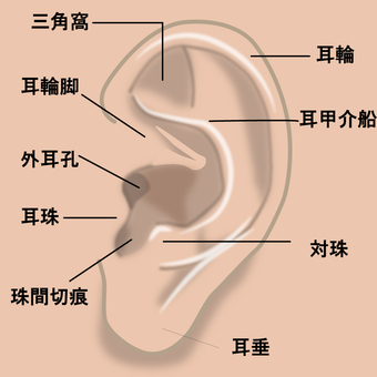 Name of ear