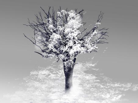 Snow tree landscape