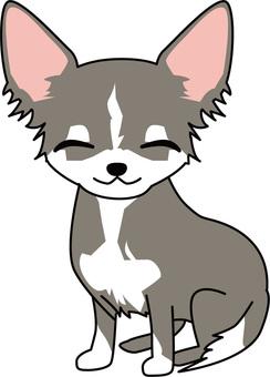 Dog - Chihuahuas 4