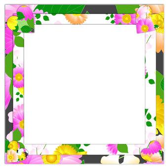 Gerbera's frame 3