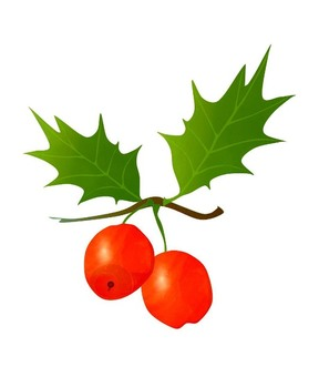 Red fruit of Western Holly