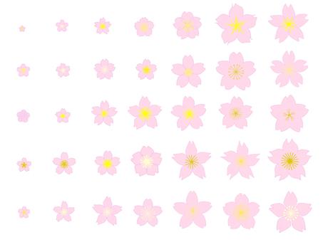 Set of cherry blossoms②