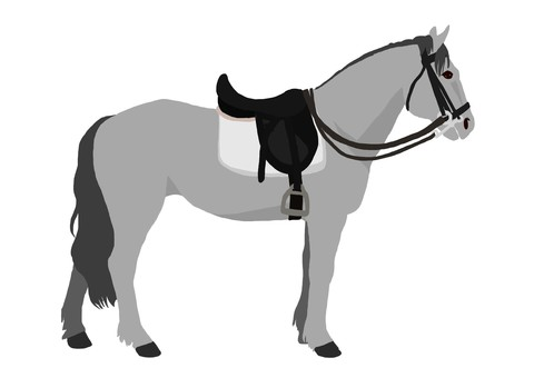 Baba equestrian equestrian (ash)