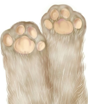 Cat forefoot ball