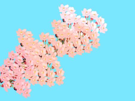 Sakura Wallpaper Blue Sky