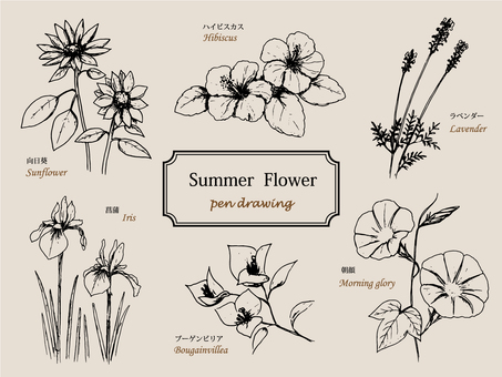 Summer flower pen drawing