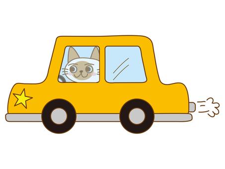 Shamu cat driving