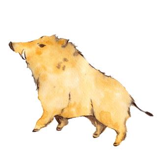 Pig, watercolor painting
