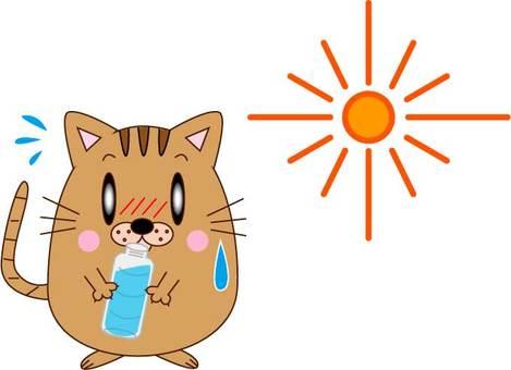 水分補給・猫