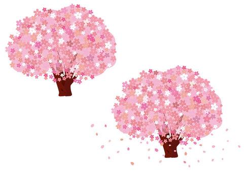 Sakura (Part 4: Thin color)