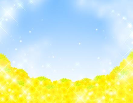 Rape flower _ Sky Rape flower field glitter