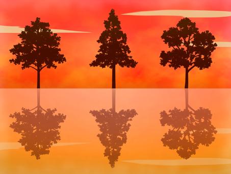 Evening tree silhouette
