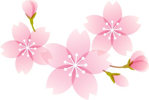 200126.Cherry blossom 5