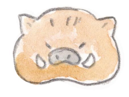 Wild boar face