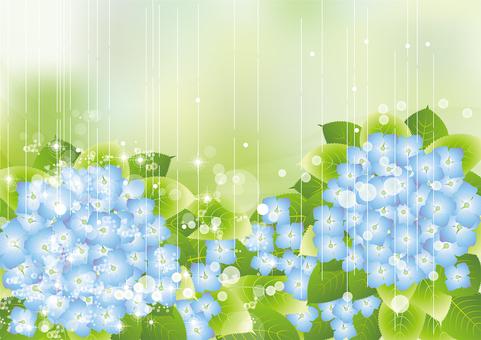 雨の中の紫陽花68