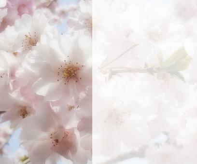 꽃의 메시지 카드 6-C