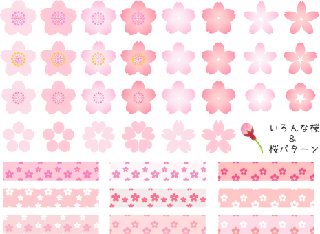 Various cherry blossoms & cherry blossoms pattern 1