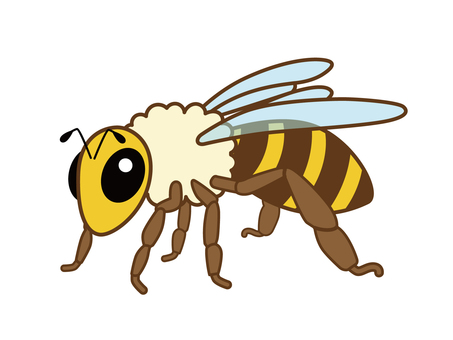 Honey bee _14