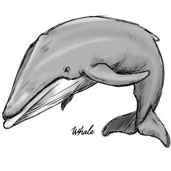 Whale A