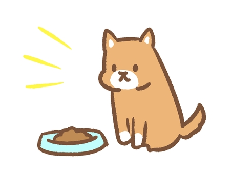 A dog waiting for rice