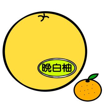 Late white and mandarin orange