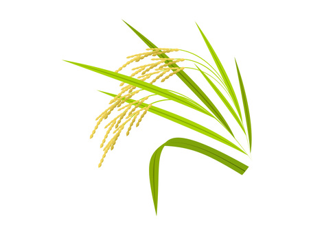 Rice -2