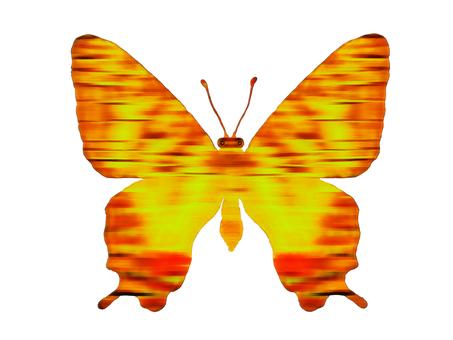 황금 나비