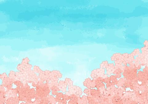 Sakura and sky