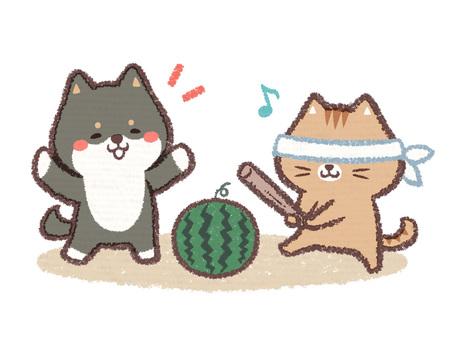수박 깨기 검은 시바 개 고양이