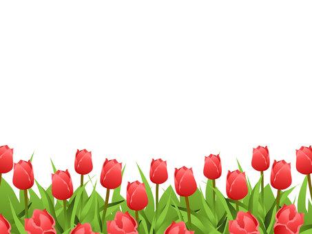 Tulip field Frame