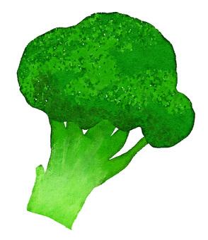 Watercolor food series broccoli