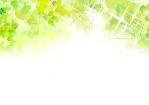 Fresh green in light