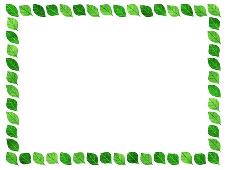 Tender green ornament frame leaves green yellow green