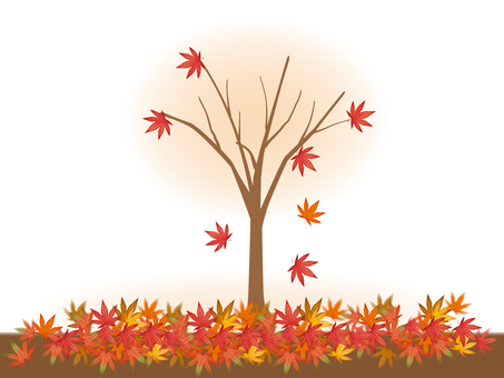 단풍 / 낙엽