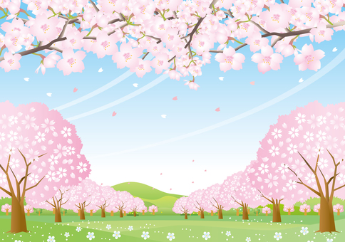 A scenery of a cherry-blossoming hill