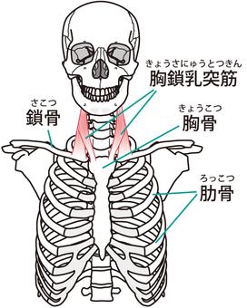 흉막 유선종